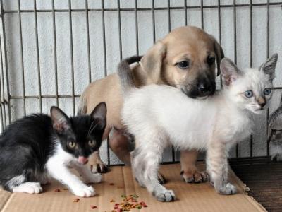 Campanha de Adoção de Cães e Gatos no Centro de Maricá